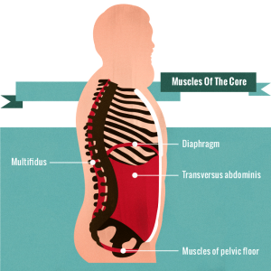 Muscles Of The Core